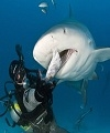 Determining the Role of Hand Feeding Practices in Accidental Shark Bites on Scuba Divers