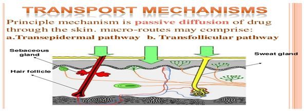 Review on Recent Approaches in Transdermal Drug Delivery System